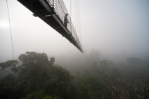 Bridge Jungle